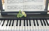 ピアノ(個人レッスン)